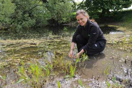 Great crested newts protected at Fenstanton site